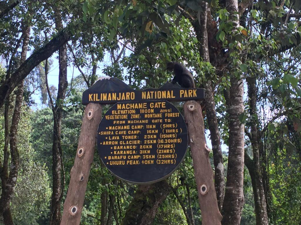 A favourite photographic spot while you are waiting for your paperwork to be processed at Machame Gate