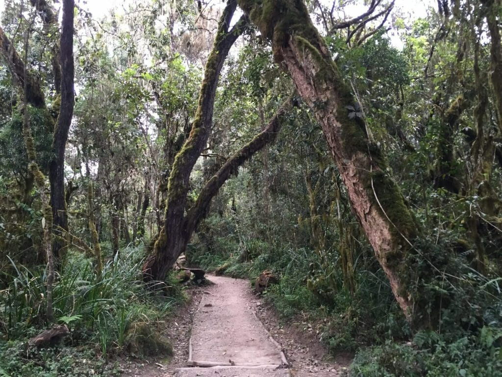 climbing Kilimanjaro day 1 forest