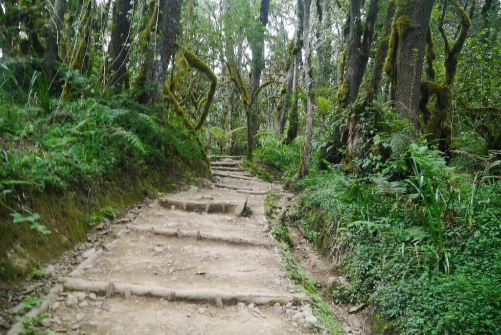 The jungle path