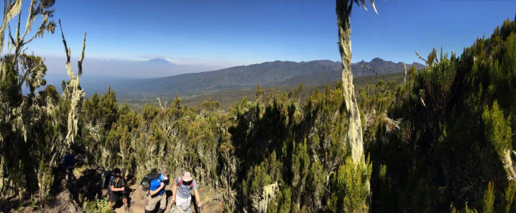 Surrounded by the giant low alpine shrubbery while Mount Meru peaks out from behind the early morning mist.
