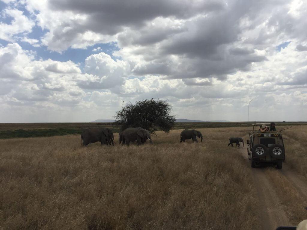 serengeti elephants crossing