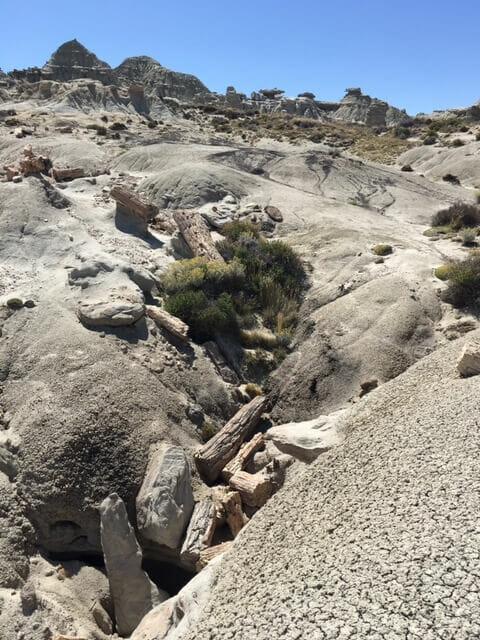 Petrified tree river bed
