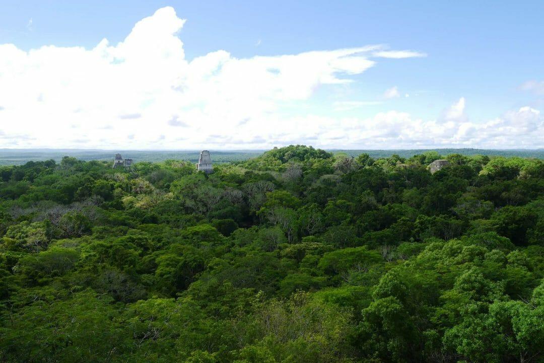 looking out over Tikal, temple 4 Tikal views, Guatemala jungle in Tikal,